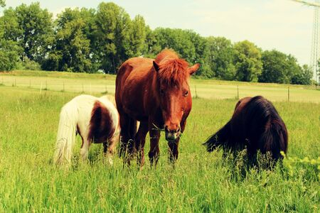 horses in the pasture.
