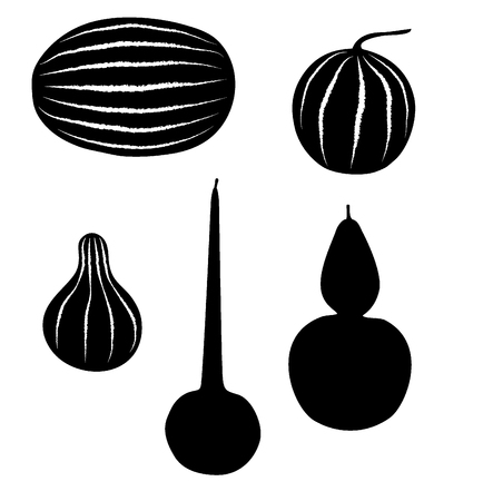 squash: watermelon, melon, gourd, squash  Illustration