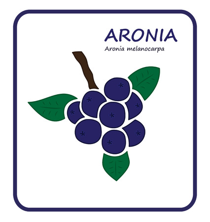 illustratin: Aronia branch vector illustratin