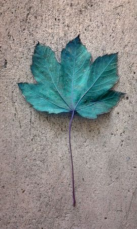sycamore leaf: Blue sycamore maple leaf on a concrete surface in autumn