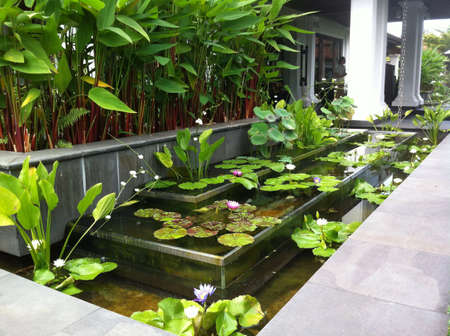 watergarden: Watergarden with orchids and lotus