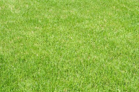 field with cut green grass Stock Photo - 3404039