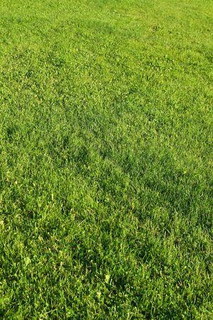 grassplot: field with cut green grass