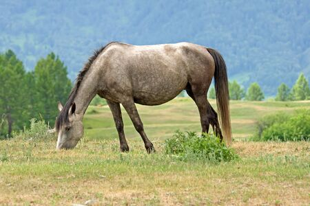 horse is eating on mountains meadow Stock Photo - 3442115