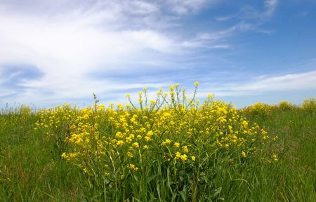 lea: green grass field and sky background Stock Photo