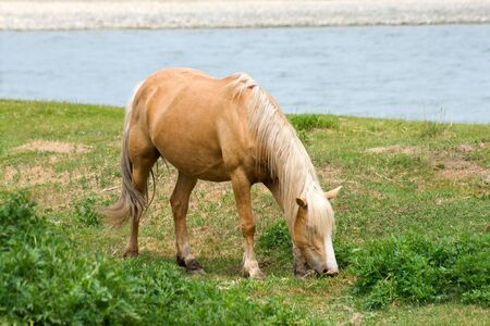 horse on meadow near river Stock Photo - 3502203