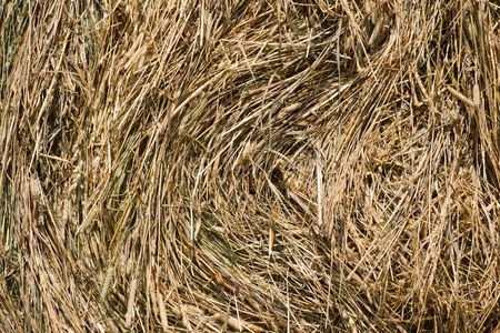 haymow: dry grass in haystack backgound Stock Photo
