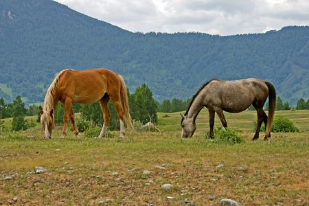 two horses on mountains meadow Stock Photo - 3533551