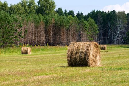 rural scene, field with haystacks over forest photo