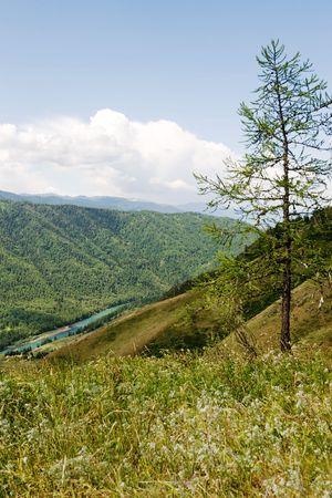 katun: Katun river in the Altai mountains