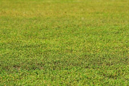 canted green grass field in perspective Stock Photo - 3823032