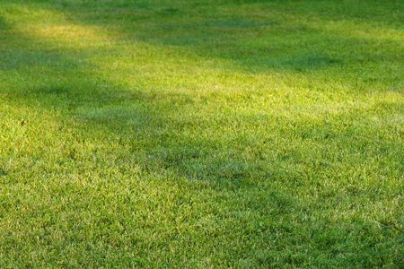 green grass field in perspective with sunlight spots Stock Photo