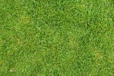 canted green grass field, view from top