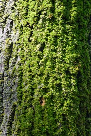 moss on bark is lighted by sun photo