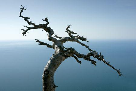 Dead tree on sea coast in Crimea mountains, Black sea