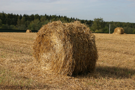 haycock: haystack on the field Stock Photo