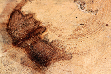 Dark wood background showing top cut of tree trunk with rings and textured surface