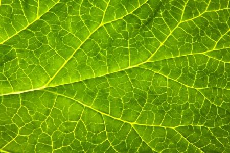pflanze: Green leaf
