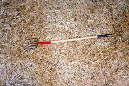 hayfork: pitchfork on straw bedding in the barn