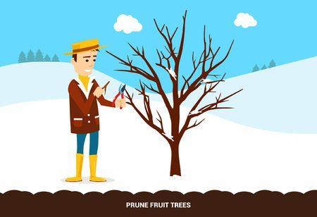 ciruela pasa: Podar árboles frutales