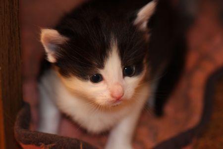 shallow dof: little kitten, shallow DOF