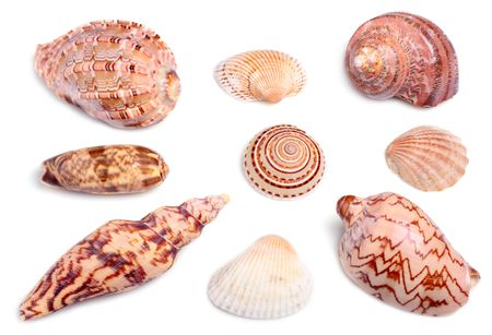 seashells on white background with light shadows