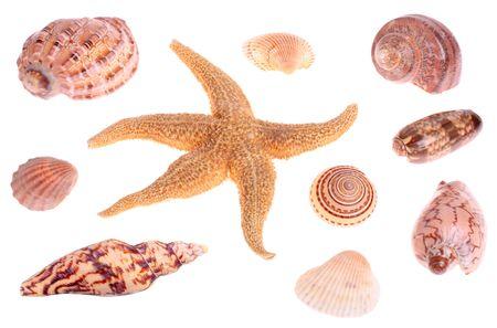 seashells and starfish isolated on white background Stock Photo