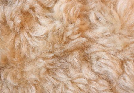 sheeps fur background