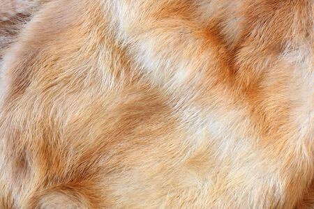 fox fur: fox fur background