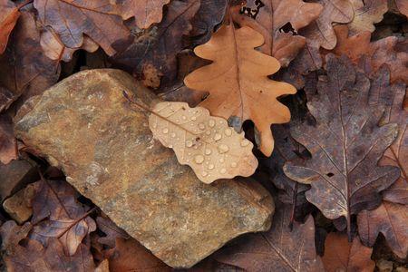 Late autumn in oak forest