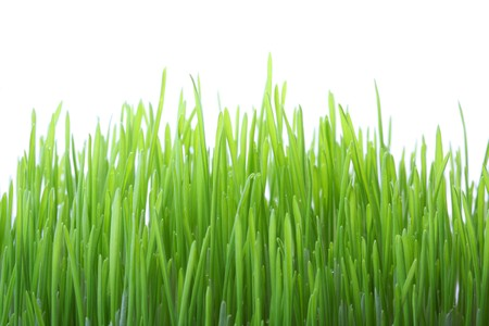 Green grass isolated on white background, shallow dof photo