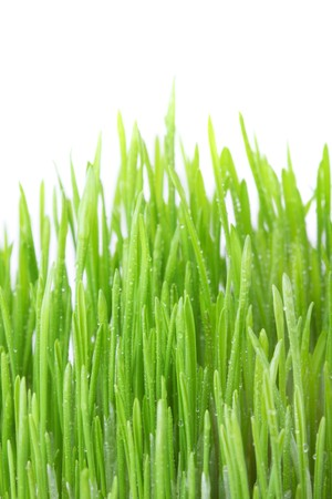 Dew covered grass isolated on white background, shallow dof photo