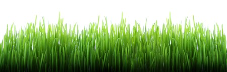 Green grass panorama isolated on white background photo