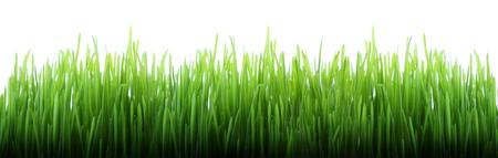Panorama van de groene gras geïsoleerd op witte achtergrond  Stockfoto