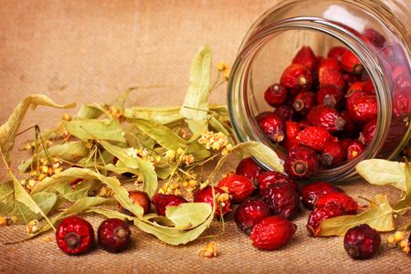 linden blossom: Rose hips and dry linden blossom on sacking background