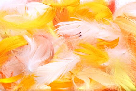 Colored feathers for background photo