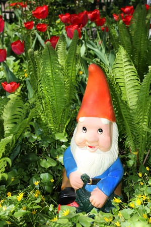 Garden gnome sitting among fern and tulips photo