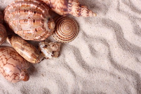 Different seashells on the sand photo