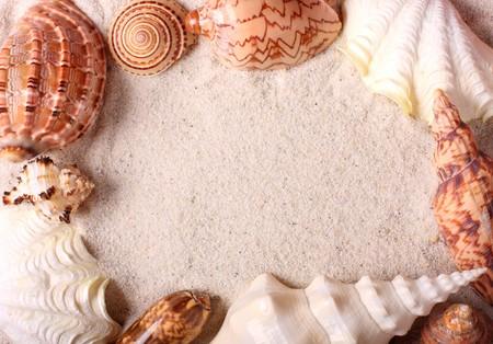 Frame with seashells on sand photo