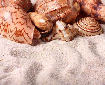 Different seashells on the sand. Shallow depth of field - focus on seashells photo