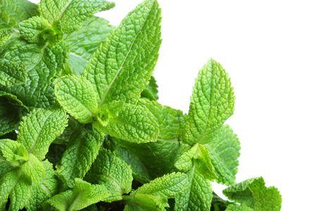 homeopathy: Borde de la menta aislado sobre fondo blanco