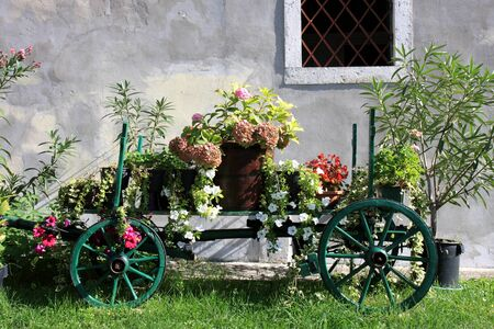 Old wooden cart full of colorful flowers  photo