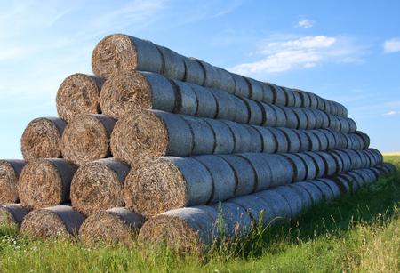 Pyramid of hay rolls on the field