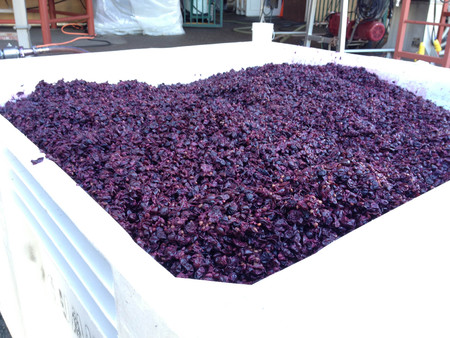 wine mash mashed grapes winery pressed