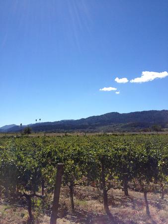 napa valley vineyard wine grape vines tour winery 写真素材