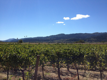 napa valley vineyard wine grape vines tour winery 写真素材