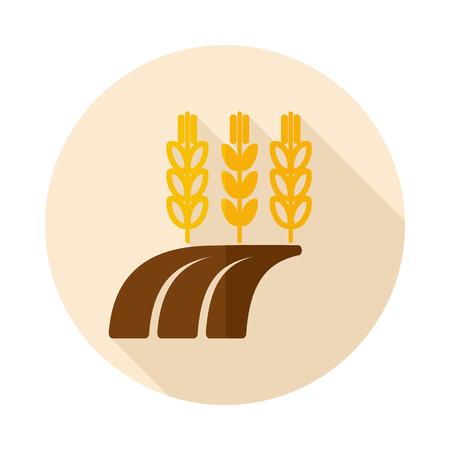 centeno: Espigas de trigo, cebada o centeno en icono plana campo con larga sombra