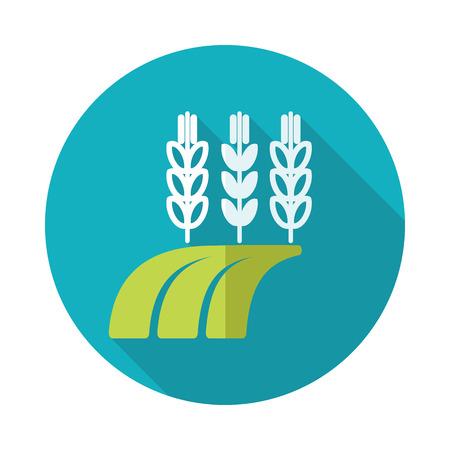 barley field: Ears of Wheat, Barley or Rye on field flat icon with long shadow Illustration