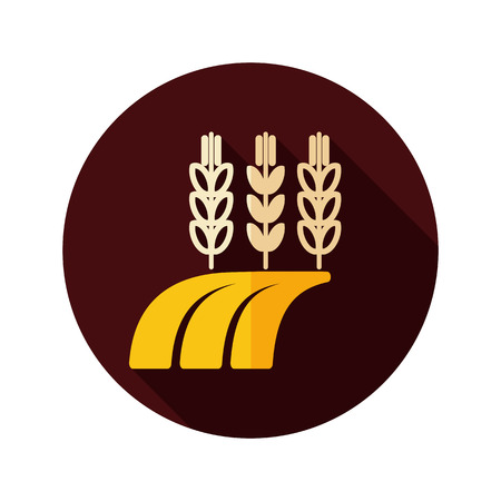 barley field: Ears of Wheat, Barley or Rye on field flat icon with long shadow, eps 10