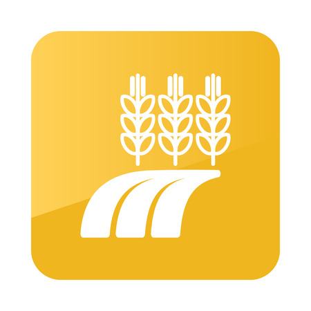 barley field: Ears of Wheat, Barley or Rye on field icon outline. Field. Farm. Vector illustration